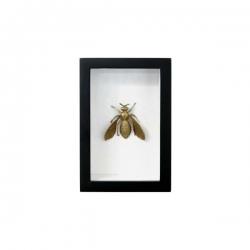 Mosiężna pszczoła w ramce - HK Living