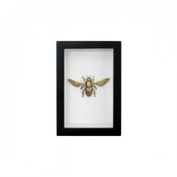 Mosiężna mucha w ramce - HK Living