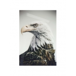 Plakat eagle na plexibond